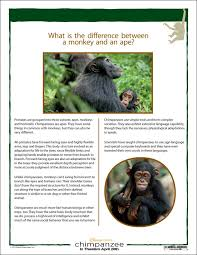 differences between chimpanzees and monkeys reading worksheet