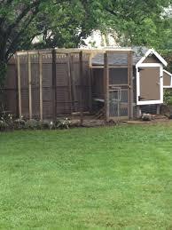 100 backyard chicken laws backyard chicken expert offers