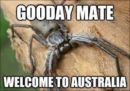 Funny Australia Day Memes - 27 hilarious australia memes that perfectly describe living down under