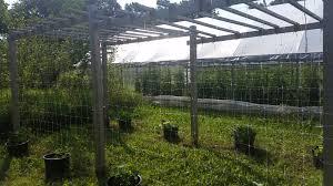 nwtc bounty garden an educational urban farm producing organic