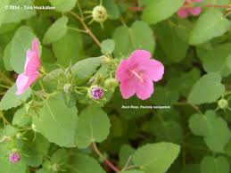 native texas plants texas native plant week my gardener says u2026