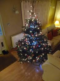 christmas trees notcutts
