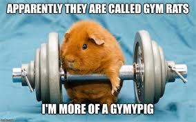 Gym Life Meme - gymlife imgflip