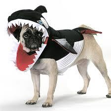 Dog Shark Halloween Costume 28 Shark Funny Dog Costume Http Funnyneel Funny Pictures