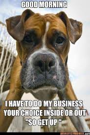 boxer dog sayings 82 best boxers images on pinterest boxer love animals and dogs