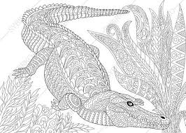 crocodile alligator coloring coloringpageexpress