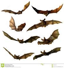 fantasy bats stock photo image 14529310