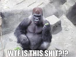 Funny Gorilla Meme - my brother took this photo at the zoo i present success gorilla