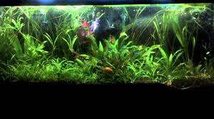 55 gallon aquarium light image result for 55 gallon low tech planted tank aquariums