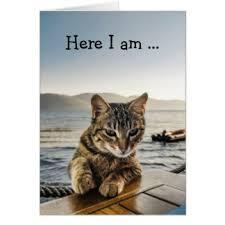 tiger cat birthday greeting cards zazzle
