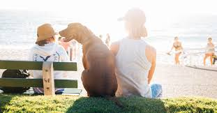 doggie beach bash nrh u2082o family water park