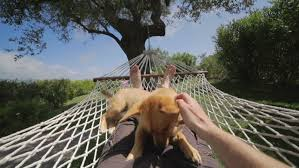Hammock Backyard Hammock Backyard Stock Footage Video Shutterstock