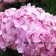 Indian Wedding Garland Price Indian Fresh Flower Garlands Indian Fresh Flower Garlands