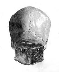 skull drawings some rights reserved this work is