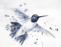 male hummingbird in flight stock vector art 182680570 istock