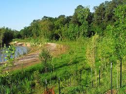 hcfcd tree planting program