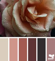 matching color schemes color dew seeds design seeds and color pallets