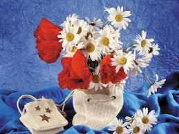 flower beautiful flowers red blue daisys shawl life still poppies