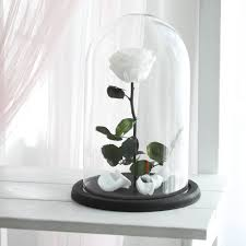 beauty and the beast rose large forever white rose