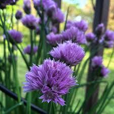 missouri native plants creating beautiful flower arrangements from herbs u0026 native plants