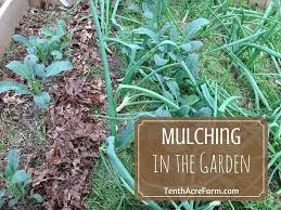 What Kind Of Mulch For Vegetable Garden by Mulching In The Permaculture Garden Tenth Acre Farm