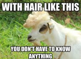 Alpaca Sheep Meme - goat memes list of goat jokes on pictures
