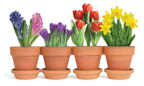 potted flowers potted flowers easter card paper house