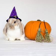 pet halloween costumes uk the best animals in halloween fancy dress mirror online