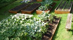 Best Type Of Mulch For Vegetable Garden - eartheasy blogknow your garden soil how to make the most of your