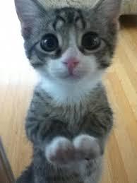 Sad Kitty Meme - cutest kitty ever sad eyes eye and kitty
