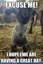 Encouraging Meme - encouraging meme 3 pun lamb memes jpg 599纓897 inspiration