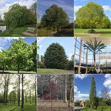 mk 50 trees