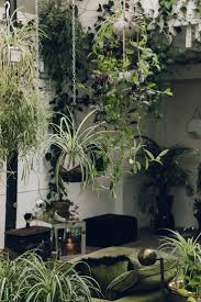 hanging plants at clapton tram in london best outdoor ideas on