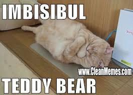 Meme Teddy Bear - teddy bear clean memes