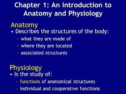 Human Anatomy And Physiology Chapter 1 Chapter 1 An Introduction To Anatomy And Physiology Ppt Video