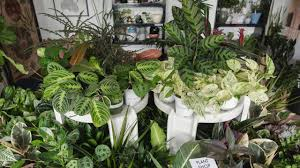 these 7 awesome plant stores will help up your interior design