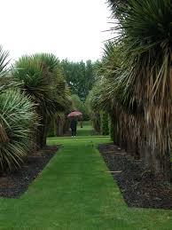 new zealand native plants when architects garden u2014 lifeart u2013 andrea haumer