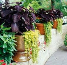 Plant Combination Ideas For Container Gardens - 35 beautiful container gardens deck patio pink blossom and petunias