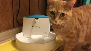 cat water fountain review isyoung brand youtube