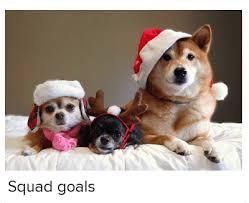 Christmas Dog Meme - squad goals christmas meme on sizzle