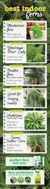 25 unique best soil for succulents ideas on pinterest planting
