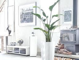biggest house plants giant indoor plants best indoor plants for men biggest indoor plants