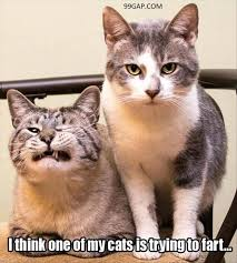 Funny Memes Cats - funny meme about two cats 99gap com