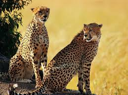 african animals for kids list of 8 african animals