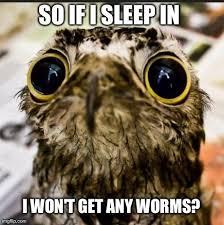 Sad Baby Meme - sad baby owl meme guy