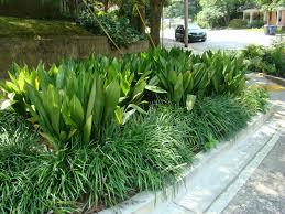 plants native to georgia georgia market bulletin blog arty u0027s garden cast iron plant lives