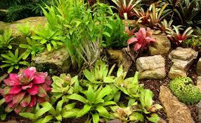 Tropical Rock Garden Tropical Home Gardens Zones