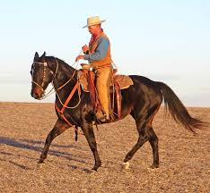 Montana how far can a horse travel in a day images Colt starting line up a legacy of legends jpg