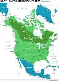 Hummingbird Map How To Help The Boreal Forest North America U0027s Songbird Nursery