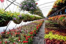 oaktown native plant nursery 100 flower nurseries near me dropseed native plant nursery